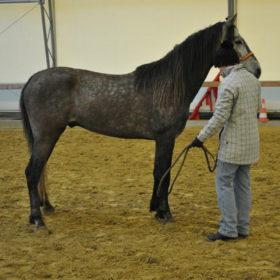 """Weiterbildung bei Peter Pfister zu Hause im März 2012 zusammen mit Karin Keller.a """"junge/rohe Pferde vom Boden arbeiten"""""""